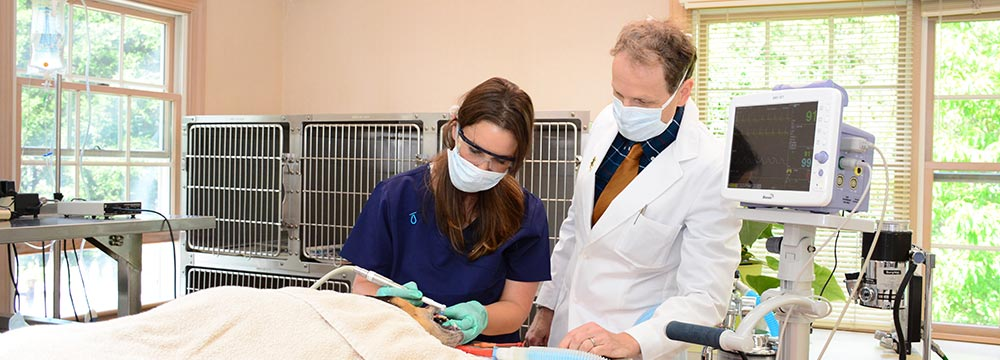 Feline Dental Cleaning in  Chagrin Falls OH