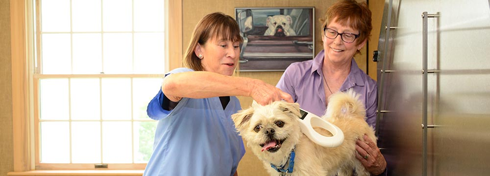 Pet Microchipping in Chagrin Falls OH
