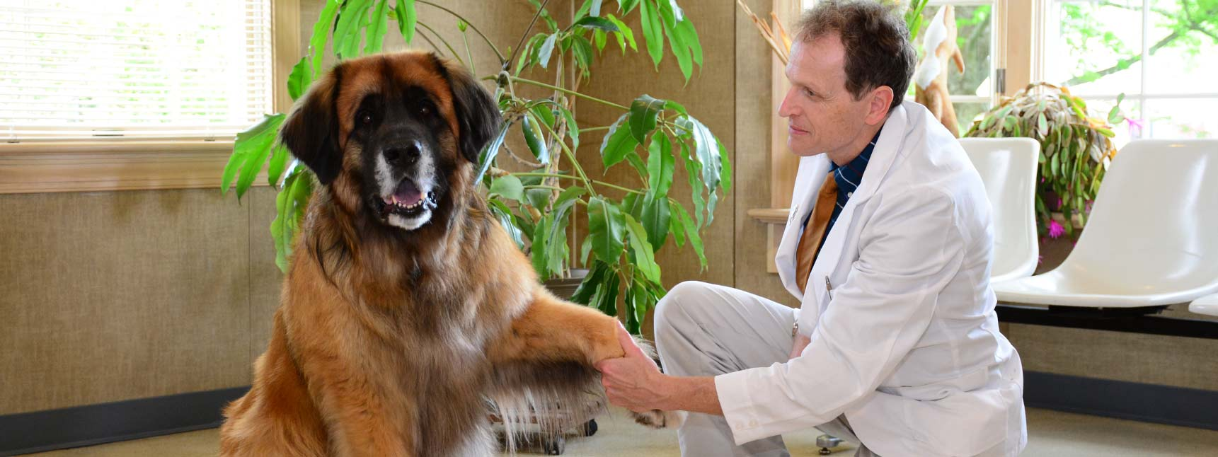Animal Hospital in Chagrin Falls OH